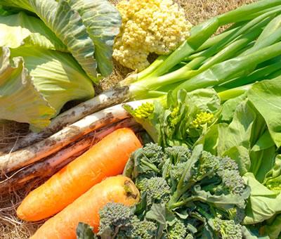 四季折々の採れたて野菜